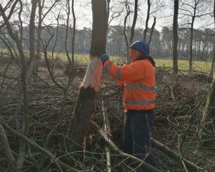Bosaanplanting werken • Exoten bestrijding