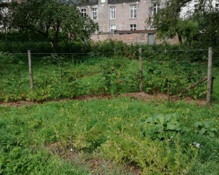 Aanplanting Openbaar Groen