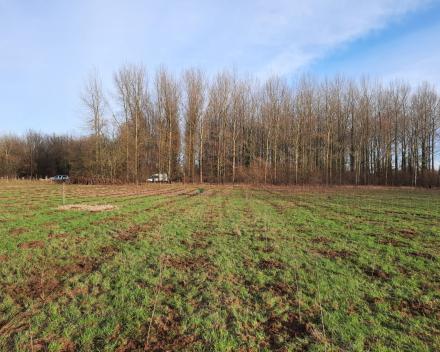 Bosaanplanting werken